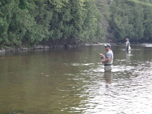 Fly Fishing for brown trout on Ontario