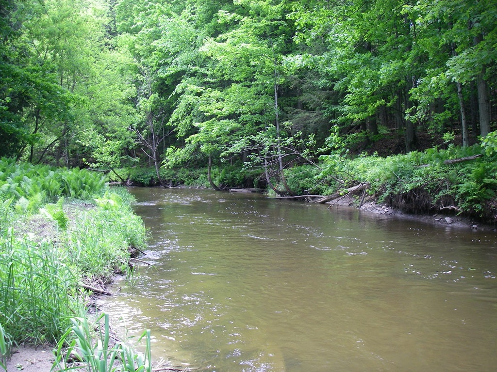 The upper Humber river trout section