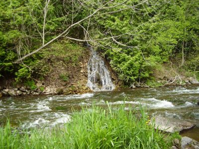 Ontario Brook Trout Rivers