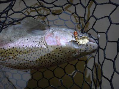Best methods for catching steelhead