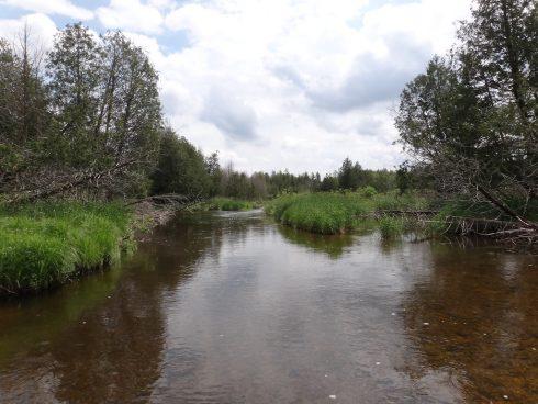 Fishing the Beatty Saugeen River