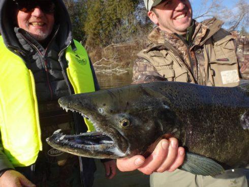 Ontario Salmon