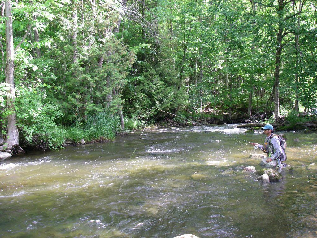 Fishing the Sydenham River