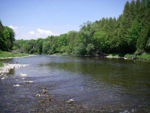 The Grand river trout section