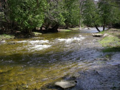 The Boyne River is one of Ontario's best trout and steelhead rivers