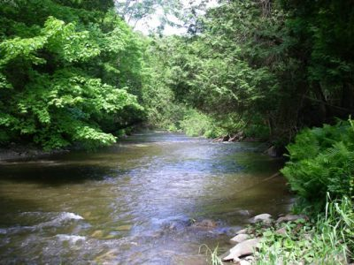 The Humber River is one of Ontario's best trout and steelhead rivers